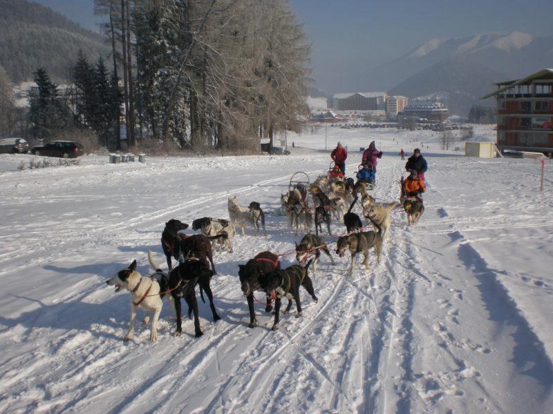 Dog Sledding Slovakia Tatras