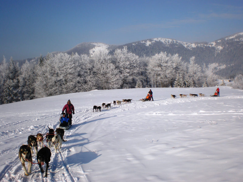 Dog Sledding Tatras Slovakia