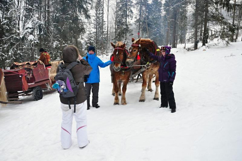 Horse And Sleigh Ride Tatras Slovakia