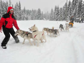 Dog Sledding High Tatras Slovakia 1