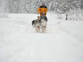 Dog Sledding High Tatras Slovakia 2