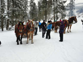 Horse Carrige Ride High Tatras 3