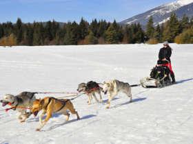 Dog Sledding Tatra Mountains