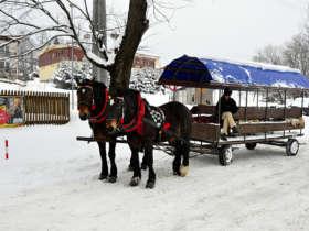 Horse Sleigh Ride Winter
