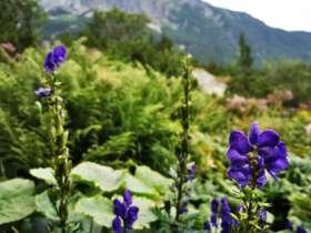 5 Tatras Flora 2
