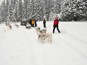 Dog Sledding High Tatras Slovakia 10