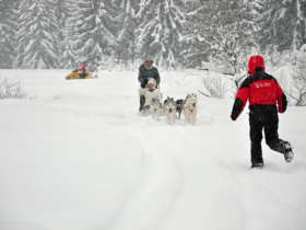 Dog Sledding High Tatras Slovakia 11