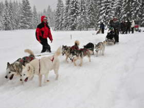 Dog Sledding High Tatras Slovakia 13