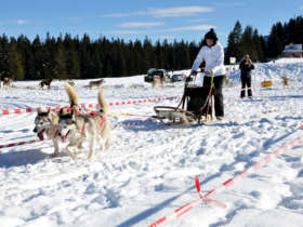 Dog Sledding High Tatras Slovakia 16