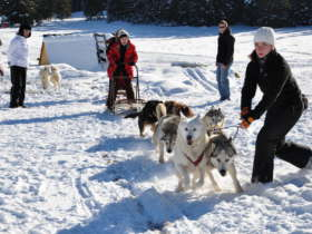 Dog Sledding High Tatras Slovakia 17