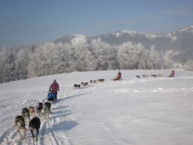 Dog Sledding High Tatras Slovakia 3