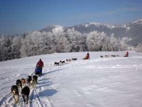 Dog Sledding High Tatras Slovakia 6