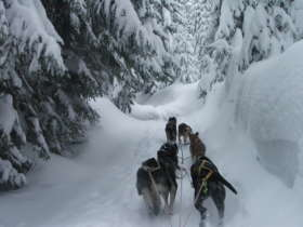 Dog Sledding High Tatras Slovakia 7