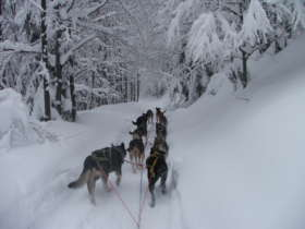 Dog Sledding High Tatras Slovakia 8