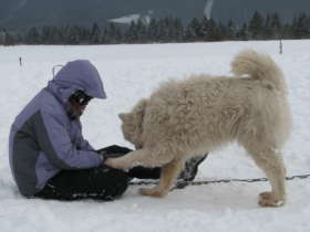 Dog Sledding High Tatras Slovakia 9