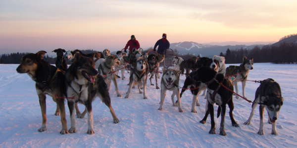 Dog Sledding High Tatras Slovakia 5