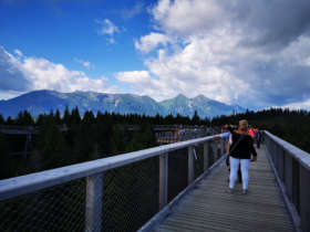 Tree Top Walk Belianske Tatras Slovakia