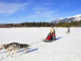 Dog Sledding High Tatras Slovakia