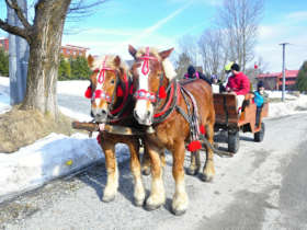 Horse Sleigh Carriage Ride Zdiar Tatras