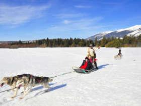 Dog Sledding High Tatras Slovakia