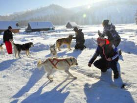 Dog Sledding High Tatras