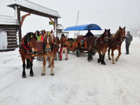 1 Zdiar Horse Sleigh Ride 23