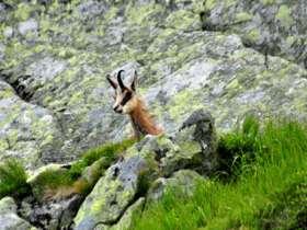 Tht Walking High Tatras Slovakia 12