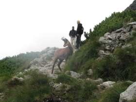 Tht Walking High Tatras Slovakia 13