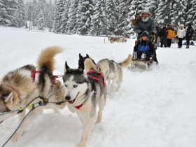1 Dog Sledding Tatra Mountains Slovakia 7