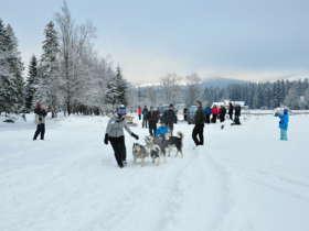 Dog Sledding Tatra Mountains Slovakia 1