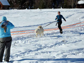 Dog Sledding Tatra Mountains Slovakia 10