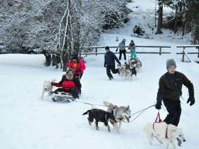 Dog Sledding Tatra Mountains Slovakia 12