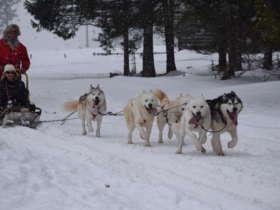 Dog Sledding Tatra Mountains Slovakia 3