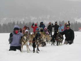 Dog Sledding Tatra Mountains Slovakia 4