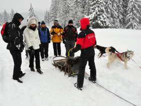 Dog Sledding Tatra Mountains Slovakia 5
