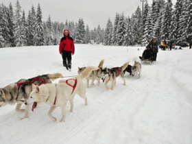 Dog Sledding Tatra Mountains Slovakia 6