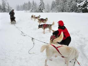 Dog Sledding Tatra Mountains Slovakia 8