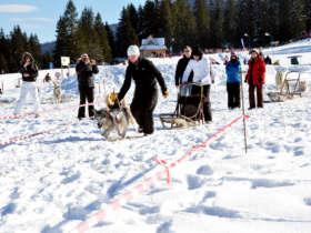 Dog Sledding Tatra Mountains Slovakia 9