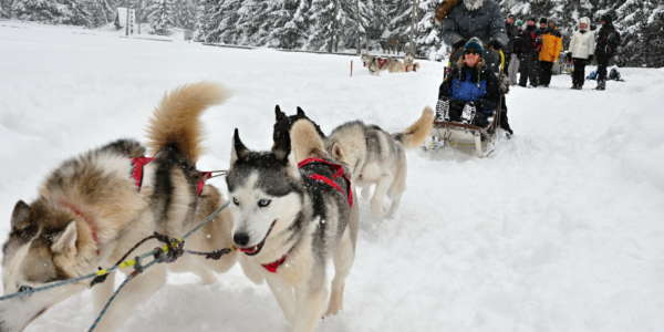 1 Dog Sledding Tatra Mountains Slovakia 7
