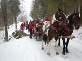 Horse Carriage Ride Slovakia
