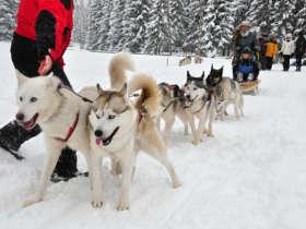 Dog Sledding Tatras Slovakia Tour Holiday Winter 3
