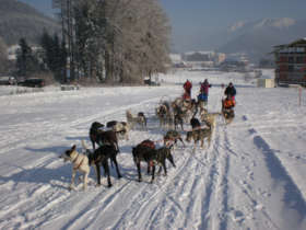 Dog Sledding Tatras Slovakia Tour Holiday Winter 2