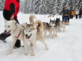 Dog Sledding Tatras Slovakia Tour Holiday Winter 3