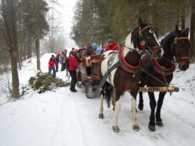 Horse Sleigh Carriage Ride Tatras Slovakia